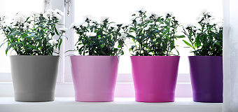 decoration__plant_pots_plants_340_PE335501